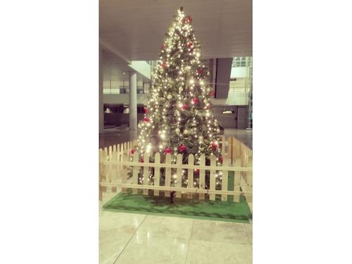 alquiler de rboles de navidad estilo tradicional de metros de altura